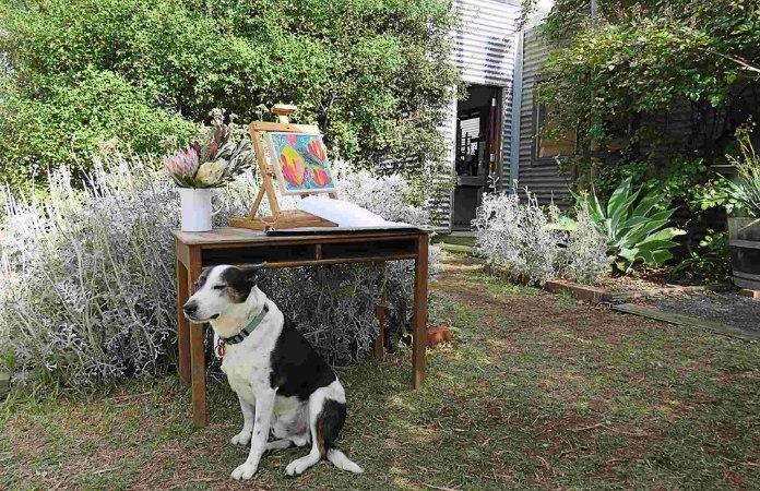 Fi Wilkie's dog Milo